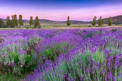 Por do sol sobre um campo da alfazema do verão em Tihany, Hungria foto de stock