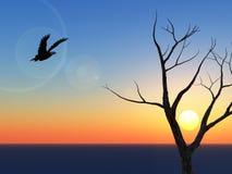 Por do sol solitário da águia Imagem de Stock