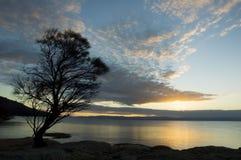 Por do sol solitário da árvore Fotografia de Stock Royalty Free