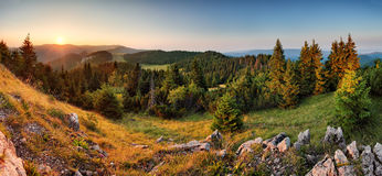Por do sol Spruce do panorama da paisagem da montanha do verde floresta - Eslováquia Fotos de Stock Royalty Free