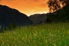 Por do sol suíço do prado do verão dos cumes Foto de Stock