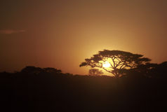Por do sol, Tanzânia Foto de Stock