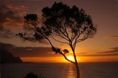 Por do sol tropical fotografia de stock