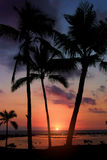 Por do sol tropical Imagem de Stock