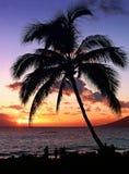 Por do sol tropical fotos de stock royalty free