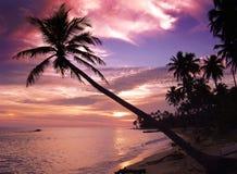 Por do sol tropical bonito foto de stock