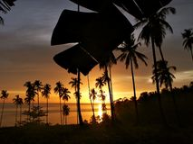 Por do sol tropical com silhueta das árvores. imagens de stock royalty free