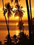 Por do sol tropical com silhueta das palmeiras. fotografia de stock
