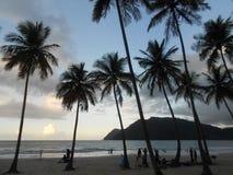 Por do sol tropical da praia da franja da palma da silhueta foto de stock royalty free