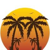 por do sol tropical e palmeiras. Imagens de Stock Royalty Free