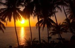 Por do sol tropico Imagens de Stock