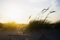 Por do sol ventoso Imagem de Stock