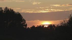 Por do sol do verão acima da silhueta da floresta, timelapse vídeos de arquivo