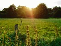Por do sol do verão de Planty Fotografia de Stock Royalty Free