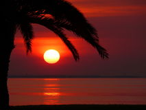 Por do sol vermelho do nascer do sol com a grandes palmeira e oceano mostrados em silhueta Fotografia de Stock