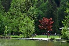 Por el lago Imagen de archivo libre de regalías