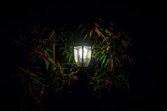 Por el resplandor de la linterna del jardín foto de archivo