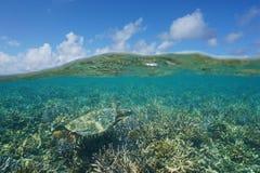 Por encima y por debajo de tortuga y del arrecife de coral de mar del agua Fotografía de archivo