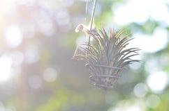 Por la mañana Foto de archivo libre de regalías