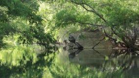 Por la mañana reservada todavía el agua de la cala de las codornices en Utah meridional refleja los árboles del cottonwood y sus  metrajes
