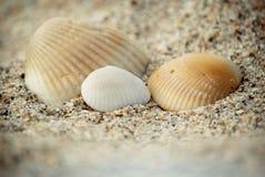 Por la orilla de mar Foto de archivo