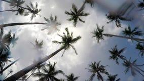 Pora Deszczowa na Tropikalnej wyspie - Padający na palmie zdjęcie wideo