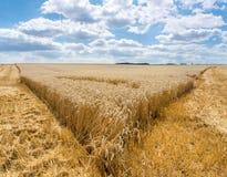 Porada od stronniczo zbierającego pszenicznego pola fotografia stock