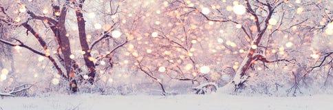 Poranek bożonarodzeniowy w centrala parku Śnieżny zimy tło zdjęcia stock