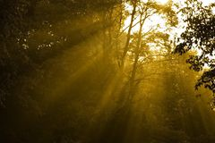 poranne słońce światła Obraz Royalty Free