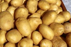 Poratoes many in market stand yellow brown Royalty Free Stock Image