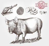 Porc-élevage illustration stock
