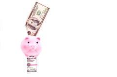 Porc avec des dollars des Etats-Unis Photo libre de droits