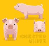 Porc Chester White Cartoon Vector Illustration Photos stock