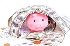 Porc dans la maison des dollars Image stock