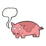 porc de bande dessinée avec la bulle de la parole Photos libres de droits