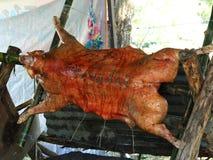 Porc de nourrisson grillé tout entier traditionnel Images libres de droits