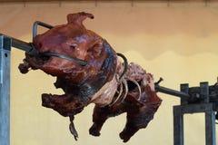 Porc de nourrisson sur la broche dans une tente photographie stock libre de droits
