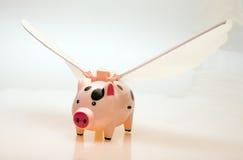 Porc de vol Photo stock