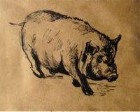 Porc domestique Photographie stock