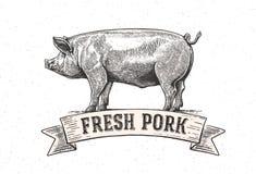 Porc graphique photo libre de droits