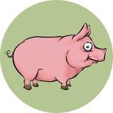 Porc heureux Images libres de droits