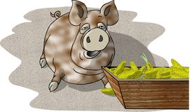 Porc mangeant d'une cuvette Photos libres de droits
