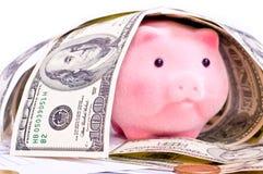Porc riche Photo stock