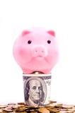 Porc sur des dollars Images stock