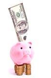 Porc sur l'argent Image stock