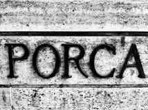 Porca Imagenes de archivo