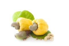 Porca de caju amarela Apple Foto de Stock