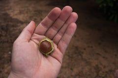 Porca de Makadam Imagens de Stock Royalty Free