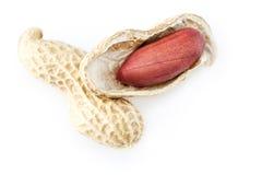 Porca do amendoim no fundo branco Fotos de Stock Royalty Free