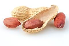Porca do amendoim no fundo branco Foto de Stock Royalty Free